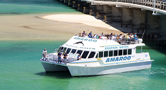 Amaroo Dolphin and Whale Watch Cruise Forster